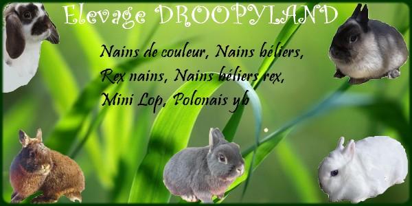 l'élevage droopyland